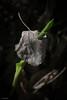 pushing trough (sami kuosmanen) Tags: suomi spring summer art colorful creative closeup north nature europe expression emotion finland forest luonto light metsä macro kuusankoski kouvola kesä lähikuva valo värikäs