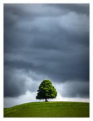 Gewitter (apodemetes) Tags: dürrenroth bern schweiz ch tree storm canonef400mmf4doisiiusm