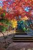 Acer Steps (Xenedis) Tags: ig acersteps australia autumn bluemountains breenholdgardens fall gardens green japanesemaple landscape leaves mountwilson mtwilson newsouthwales nsw orange path red steps trees
