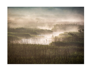 Tales from the Marshes 1