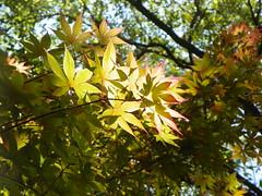 4-21-18 468 (LeeLee's pictures) Tags: citypark botanicalgardens plants flowers garden neworleans