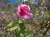 DSC07446 (familiapratta) Tags: sony dschx100v hx100v iso100 natureza flor flores nature flower flowers