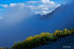 Soleil et brume (1) (didier95) Tags: montagne paysage fleur fleurjaune coldagnel hautesalpes queyras nuage bleu jaune