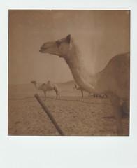 Captivity • PolaroidWeek   Day 4/2 (o_stap) Tags: filmisnotdead believeinfilm ishootfilm polaroid600 impossibleproject roidweek polaweek polaroidweek polaroid bw sx70
