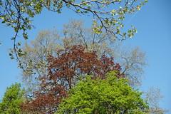 Stack of trees in spring (Sockenhummel) Tags: baum bäume tree mai grün bundesplatz deciduous evergreen büsche fuji xt10 natur frühling stadtbäume