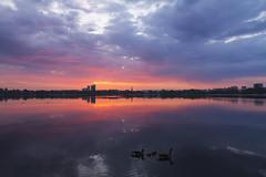 Früh übt sich im früh aufstehen (Lilongwe2007) Tags: hamburg deutschland gänse vögel jungtiere gössel küken sonnenaufgang ausenalster spiegelung see wasser morgens früh tiere natur landschaft