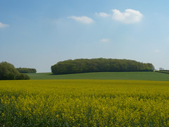 Taylor's Wold (sianmatthews25) Tags: sk63s nottinghamshire brassica napus arable
