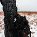 Prescribed Burn at Saint Croix State Park, Minnesota
