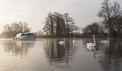 Swans and boat Dawn river Bure near Horning (#Dave Roberts#) Tags: dawn light norfolk broads swan swans boat river bure april 2018 spring reflection calm peace idyllic canoe saycheese