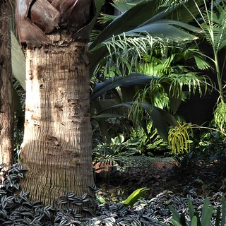 Chicago, Garfield Park Conservatory, Palm Tree Trunk with Tropical Foliage