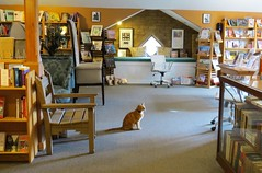 What to Read Next? (Patricia Henschen) Tags: colorado newmexico taos taosnewmexico cat book store mobydickens opcit