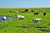 Fishing village of Netherlands (Shantanu_NL) Tags: marken volendum fishing village netherlands holland europe travel holidays weekend sunday saturday leave sunny sun green pasture farm yard barn catlle farming nature water blue lighthouse blogger nikon love