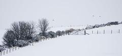 Winter fence (Elisafox22) Tags: elisafox22 sony rx10iii fencedfriday hff fencefriday fence fenceposts field gate snow snowing barbedwire fields rabbits birds sky outdoors winter view scotland aberdeenshire elisaliddell©2018