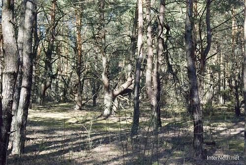 Волинський ліс InterNetri Ukraine 1762622322