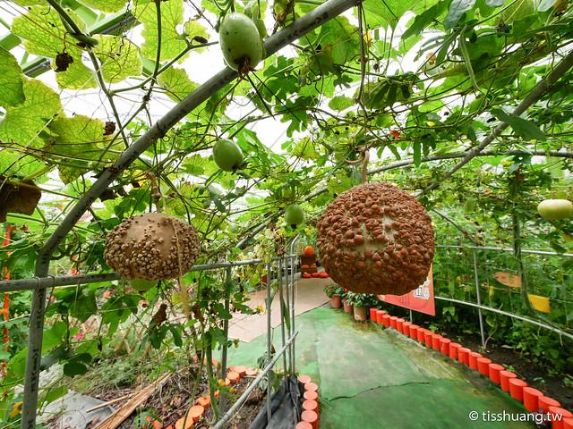 旺山休閒農場-1270008