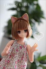 Maki - Maya Meow Meow (Lovely-kalea) Tags: pure neemo maya meow