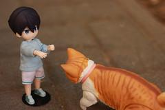 おいでよ (-Amaterasu-) Tags: animefigure toyphotography obitsu obitsu11 nanase haruka free オビツ オビツ11