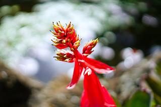 Nevis Botanical Gardens, St Kitts & Nevis