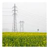 Power (AEChown) Tags: windmill pylons wires oilseedrape yellow mist france powerlines power pylon field lines