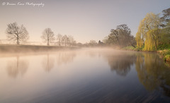 The River Eden (.Brian Kerr Photography.) Tags: cumbria edenvalley lazonby photography rivereden landscapephotography landscape trees mistymorning spring springtime reflections briankerrphotography briankerrphoto nature naturallandscape natural outdoor outdoorphotography opoty onlandscape sonyuk formatthitech visitbritain vanguarduk firecrest