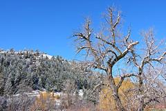 Springtime in the Rockies (Colorado Sands) Tags: lairothebear openspace park idledale colorado jeffersoncounty usa sandraleidholdt landscape april springtime snow tree spring hiking