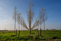 HFF (Marco van Beek) Tags: hff holland europe beautiful world nikon d5000 afs dx nikkor 18200mm f3556g ed vr ii landscape nature tulips agri fence