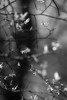 ain't life grand (courtney065) Tags: nikond200 nature landscapes monochrome bw blackandwhite shadows textures glow softlight artistic abstract foliage flora branchlets tree blurred leaves woodland bucolic