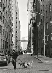 Dumbo Dogs (czuerbig) Tags: 131 20170405 5min iso400 ilfordhp5 kodakhc110 leicam6ttl newyorkcity summicron5020 monochrome outside people streetphotography sunny travel urban
