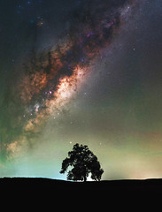 Milky Way Rising over Keysbrook, Western Australia (inefekt69) Tags: milky way skytracker ioptron cosmology southernhemisphere cosmos southern westernaustralia australia dslr long exposure rural nightphotography nikon stars astronomy space galaxy astrophotography outdoor milkyway core great rift 50mm d5500 panorama stitched mosaic lone tree farm nature silhouette landscape msice hoya red intensifier didymium filter sky keysbrook night explore explored