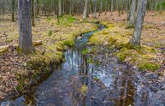Forest Stream Reflections (John Kocijanski) Tags: stream brook water reflections forest woods woodland spring landscape canon18135mmstmlens nature sullivancounty