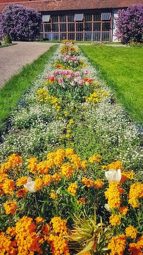 Flowerstripe