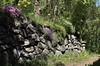 mur en pierres sèches (bulbocode909) Tags: valais suisse pierressèches murs fleurs planuit printemps vert tulipes arbres forêts montagnes nature jaune sentiers