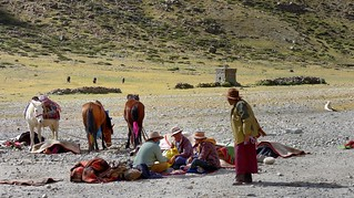 Porters and pack animals for the Kailash Kora, Tibet 2017