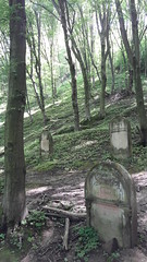 Jewish Cemetery in Kazimierz Dolny, Poland. (Team Ravenpuff) Tags: forest poland nature spring history cemetery