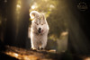 """Picture of the Day (Keshet Rescue) Tags: dog rescue kennel kennels adoption """"dog adoption"""" ottawa ontario canada keshet large breed dogs animal animals pet pets """"blood bank"""" interactive game video husky sunbeam sun rays beam forest"""