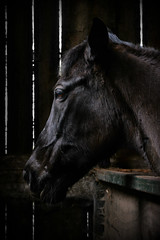 In the dark (PentlandPirate of the North) Tags: horse stable black beauty ~flickrinnes flickrinnes