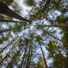100 Acre Wood 09 (ScottyBgood) Tags: scottyandronnyshow ilovebc pockettrees britishcolumbia vancouverisland 100acrewood