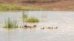 Nairobi-Nationalpark-7778 (ovg2012) Tags: kenia kenya nairobi nairobinationalpark safari