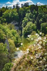 Blick vom Gespaltenen Felsen auf die Donau (buchsammy) Tags: bäume donau donautal flus himmel landschaft sonnenschein sonyalpha9 sonyselfe70200mmf28gmos sonyphotography trees wald wolken clouds deutschland forrest germany landscape river sky sunshine sonyselfe70200mmf28gmoss