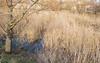 Бельцы,Тракторное озеро / Balti, tractor lac / Balti, Tractor Lake (photobankmd) Tags: beltsy tractorlake tractorlacbalti balti lac lake moldavia moldova тракторноеозеро бельцы бэлць молдавия молдова озеро