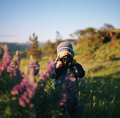 the good things in life, part two (manyfires) Tags: film analog hasselblad hasselblad500cm mediumformat square child portrait peoplescape henry holga toddler rowenacrest oregon pnw pacificnorthwest wildflowers lupine columbiarivergorge gorge bokeh photographer
