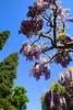 Lente @Kruidtuin Leuven (Kristel Van Loock) Tags: kruidtuin kruidtuinleuven leuvensekruidtuin lenteindekruidtuin lente2018 lente 6mei2018 spring primavera printemps spring2018 leuven louvain lovanio lovaina löwen atleuven seemyleuven visitleuven loveleuven leuveninbeeld vlaanderen vlaamsbrabant flanders fiandre flandre flemishbrabant brabantflamand brabantefiammingo visitflanders visitflemishbrabant visitbelgium leveninleuven drieduizend 3000 hortusbotanicuslovaniensis botanicalgarden jardinbotanique jardimbotanico botanischetuin botanischergarten giardinobotanico belgium belgique belgien belgië belgio belgica turismobelgio toerismevlaanderen toerismevlaamsbrabant toerismeleuven stadleuven 06052018 ortobotanico springseason springtime blauweregen wisteria