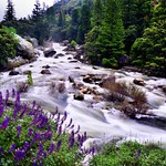 The Merced River Flows on By... (Yosemite National Park) thumbnail
