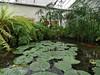 Giardino botanico  di Villa Rocca (chiara7171) Tags: villarocca chiavari liguria parchistorici giardinobotanico ninfee