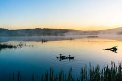 Dawn Chorus 2 // Leighton Moss (Ian Livesey) Tags: leightonmoss rspb landscape uk silverdale england lancashire birds dawn chicks