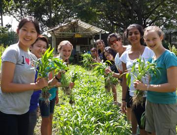 Traidhos Farm, Thailand