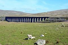 Ribblehead Viaduct in North Yorkshire (Majorshots) Tags: northyorkshire yorkshire yorkshiredales yorkshiredalesnationalpark ribblehead ribbleheadviaduct settletocarlislerailwayline