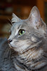 Cat (Stei&Helvi) Tags: cat chat animal de compagnie sony alpha félin feline wildlife faune macro eyes