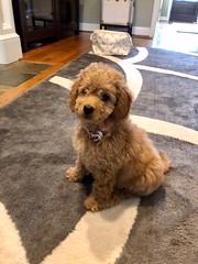 Penny's sweet Ellie!