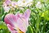 Garden (Maria Eklind) Tags: garden spring macro malmö vårtecken gardens växter trädgård sweden malmöofgarden blommor closeup flower sslottsträdgården skånelän sverige se